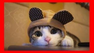 Download Compilation de chat très drôle avec des chutes Video