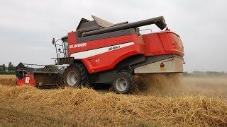 Download |Real-Farmer| Trebbiatura Frumento 2015 -Harvest wheat- |FULL HD| Video