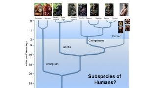Download CARTA: The Origin of Us - Michael Hammer: Interbreeding with Archaic Humans in Africa Video