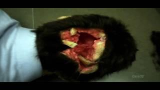 Download Behind the scenes of The Belko Experiment Video