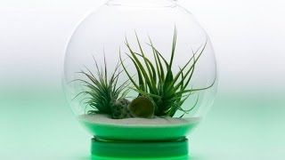 Download Top 5 Futuristic Indoor Garden Gadgets Invention Video