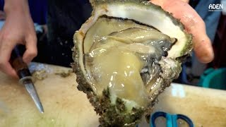 Download Japanese Street Food: Giant Oysters Video