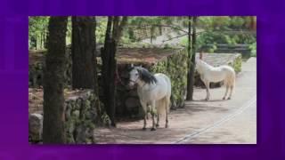 Download Los extravagantes lujos que Javier Duarte tenía en su rancho 'Las Mesas' Video