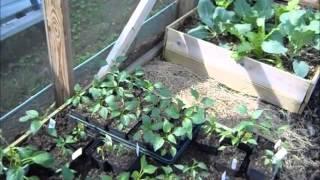 Download Chickens ~ Garden Update ~ Coop Roof Video