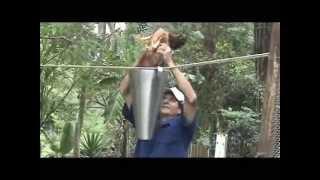 Download Desplumadora Pollos en Acero Inoxidable Video