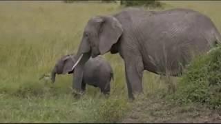Download Pt 1 Safari Live's Sunset Safari Drive at 2:30 PM on Dec 23, 2017 Video