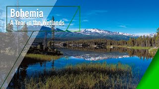 Download Bohemia - A Year in the Wetlands - The Secrets of Nature Video