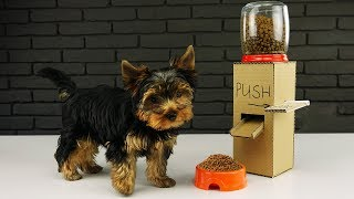 Download DIY Puppy Dog Food Dispenser from Cardboard at Home Video