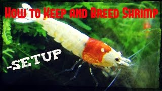 Download How to Keep and Breed Shrimp - Setup Video
