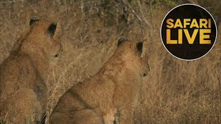 Download safariLIVE - Sunrise Safari - July 10, 2018 Video