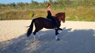 Download CURIOSO LXXVII - PRE stallion finely schooled ridden by Rikki For Sale with TBSH Video