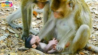 Download Poor newborn baby cry too much cos hungry milk|Young mom don't let newborn milk her|Monkey Daily 666 Video