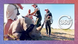 Download Vet Darts a White Rhino | Wildlife in 360 VR Video