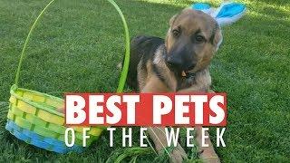 Download Best Pets of the Week | May 2018 Week 1 Video