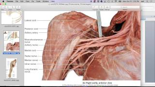 Download Fall 2016, Spinal Cord and Spinal Nerves 2 Video