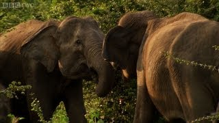 Download Mother fights for baby elephant - Sri Lanka: Elephant Island preview - Natural World - BBC Two Video