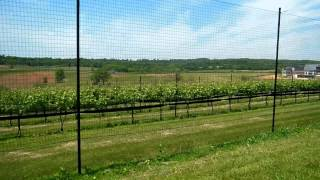 Download Virginia Wine: Stone Tower Winery Video