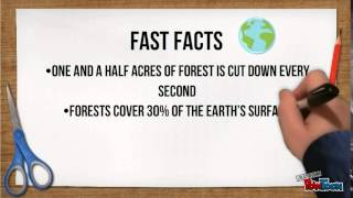 Download What is Deforestation? Video