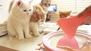 Download 고양이 철판 아이스크림 Video
