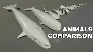 Download Animals size comparison Video