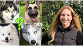 Download WOLFDOGS - WHICH TYPE TO GET? Video