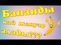Download Бананды қай жануар алады? психологиялық тест Video