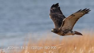 Download Kristofer Rowe using the new Tamron 150-600 G2 lens Video
