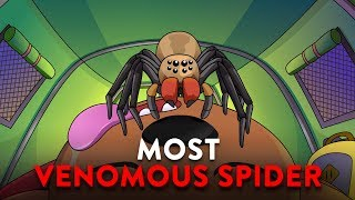 Download What If You Were Bitten By The Most Venomous Spider? Video