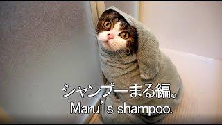Download シャンプーされるまる。-Maru's shampoo.- Video