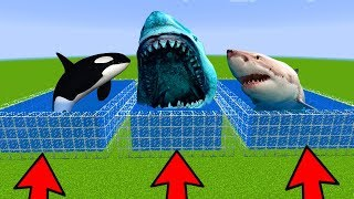 Download DO NOT CHOOSE THE WRONG POOL in Minecraft PE (Megalodon, White Shark & Orca) Video