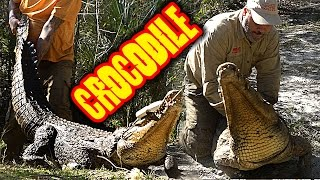 Download CATCHING A GIANT NILE CROCODILE (UNSCRIPTED AND DANGEROUS) Video
