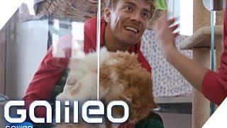 Download 3 Tage als Tierpfleger im größten Tierheim Deutschlands   Galileo   ProSieben Video
