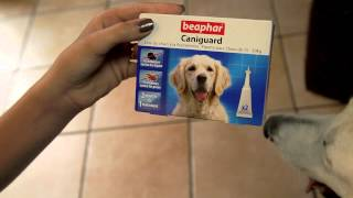 Download Beaphar Caniguard grand chien Video