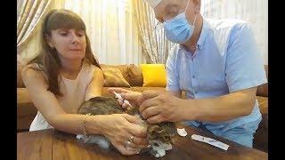 Download Kedicik Alinanın aşı zamanı, Dede doktor oldu iğne yaptıi elif kedi kostümü giydi Video