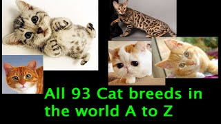 Download All 93 Cat Breeds In The World (A to Z) Video