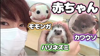 Download 良いハンターは動物に好かれちまうんだよなぁ~!【赤髪のとも】 Video