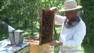 Download Méhészet - Székelyföldi Népi Mesterségek Video