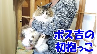 Download 保護猫ボス吉、感動の初抱っこ Carrying Boss Cat in My Arms for the First Time. Video