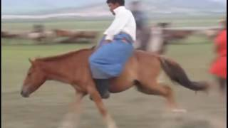 Download The Wrong Way To Start A Horse - Mongolian Horse Training Video