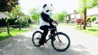 Download Everything is Better in a Panda Costume Video