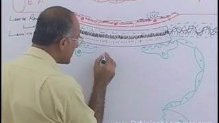 Download Function of Nephron in Kidney - Regulation of GFR - Renal System Physiology Video