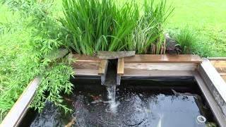 Download best koi pond design! Video