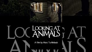 Download Looking At Animals Video