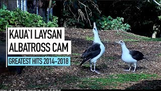 Download Kauai Albatross Cam Greatest Hits 2014–2018 Video