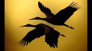 Download Enigma - Bird Of Silver 1979 Video