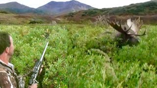 Download GIANT Alaskan Moose RUNS OVER hunter!!!!! The Journey Part 2 Video