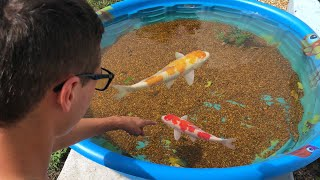 Download Mini POND EMERGENCY!! NEW COLORFUL FISH Video