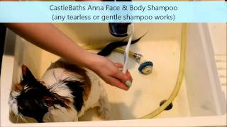 Download How to Wash & Dry a Persian Cat Video