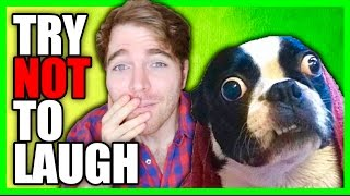 Download TRY NOT TO LAUGH *CHALLENGE* 6! Video
