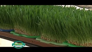 Download Hydroponics Training in Kenya Video